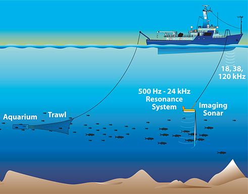 Produção de ecos pelo sonar.