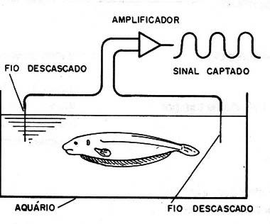 Figura 2 – Detectando as correntes geradas pelos peixes